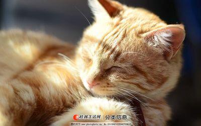 家庭寄养宠物猫和小型犬,长短期都可以