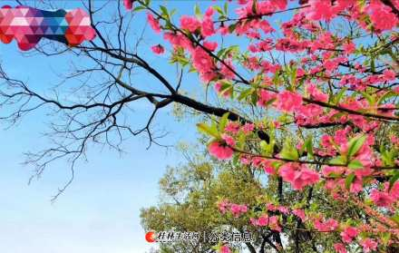 桂湖花园附近3楼3房2厅1卫110平方米1600元家电齐全两台空调