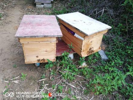 爸妈自己养的纯天然蜂蜜