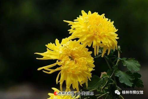 桂林市殡仪馆销售各类丧葬用品,个性化告别仪式定制等殡葬业务!(0773-5812085)