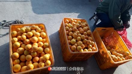 广西桂林蜜香橙是什么橙?蜜香橙产地是哪里?