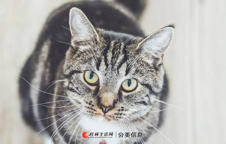 本众宠物医院知识百科:猫得了猫癣怎么治