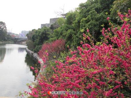 象山区南门桥漓江边3房2厅2卫的130平方米房子出售73万