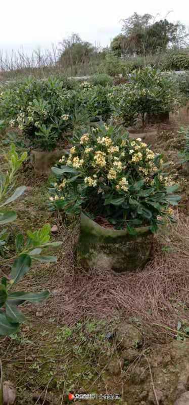 园林绿化设计.办公楼花卉.庭院花卉种植.摆设.